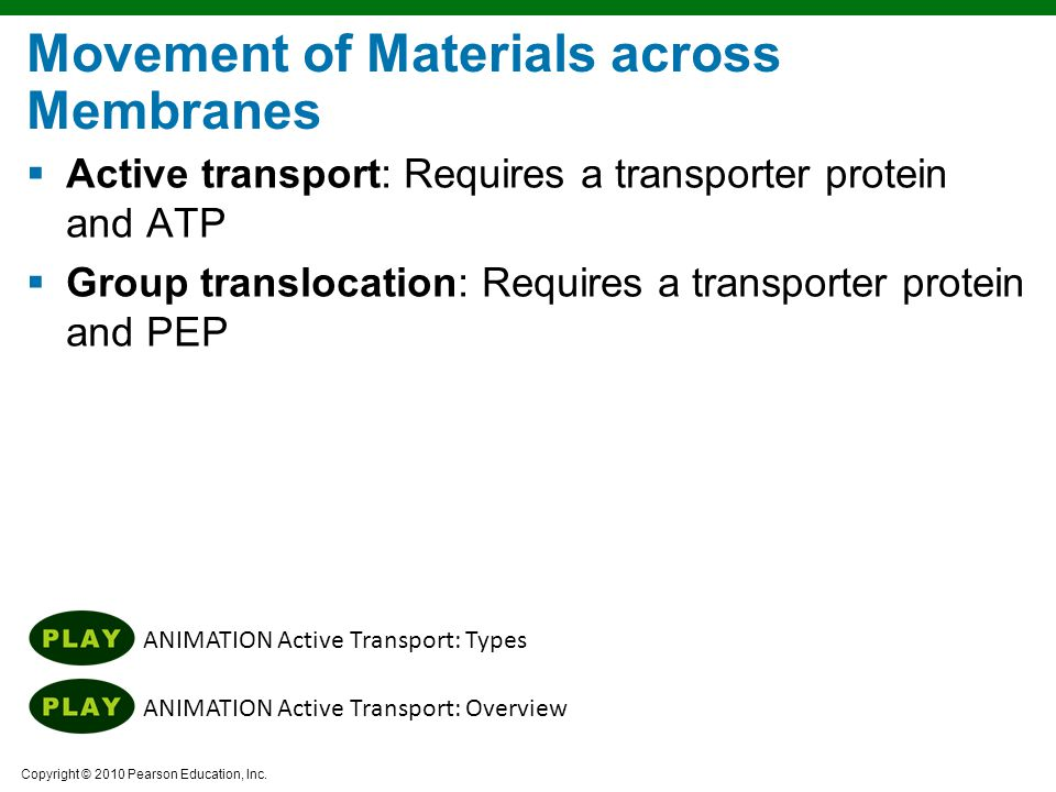 Copyright © 2010 Pearson Education, Inc. ANIMATION Active Transport: Overview ANIMATION Active Transport: Types Movement of Materials across Membranes