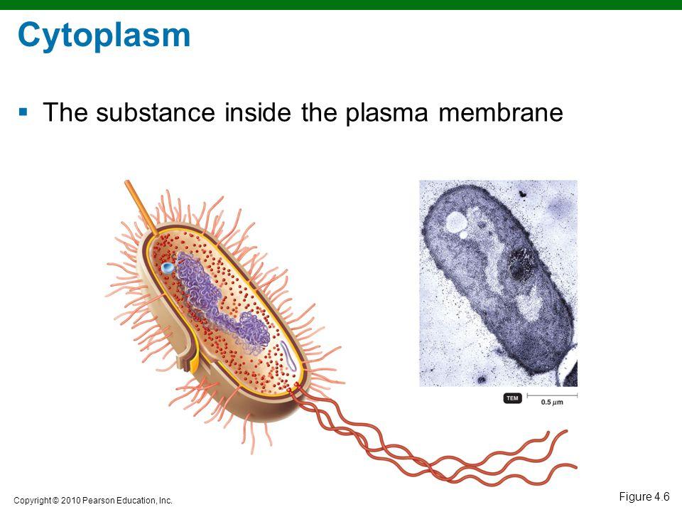 Copyright © 2010 Pearson Education, Inc. Figure 4.6 Cytoplasm  The substance inside the plasma membrane