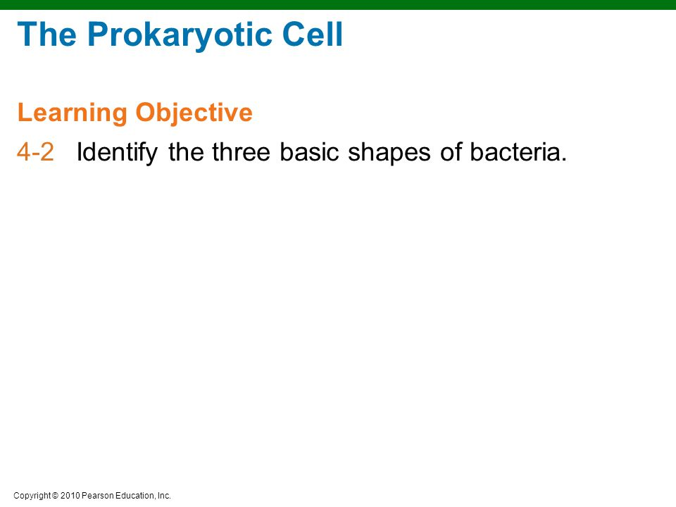 Copyright © 2010 Pearson Education, Inc. The Prokaryotic Cell 4-2Identify the three basic shapes of bacteria. Learning Objective