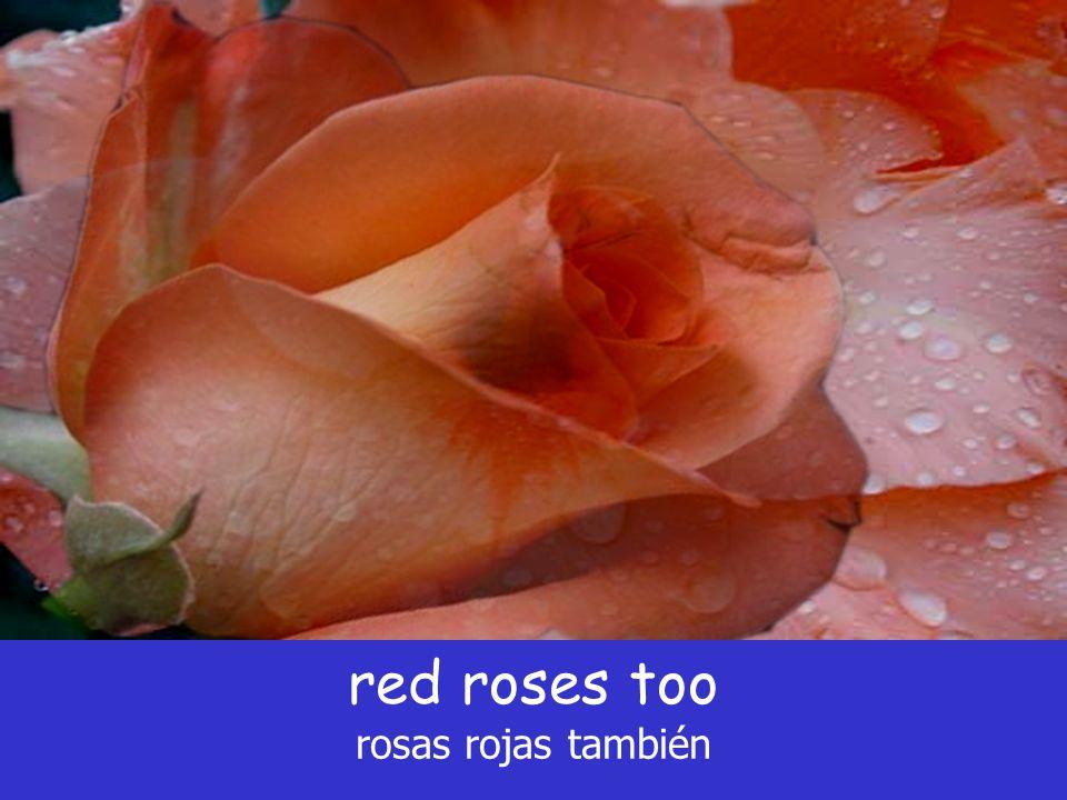 red roses too rosas rojas también