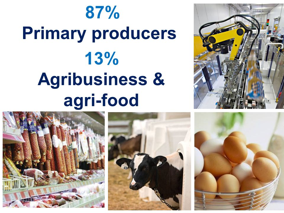 87% Primary producers 13% Agribusiness & agri-food