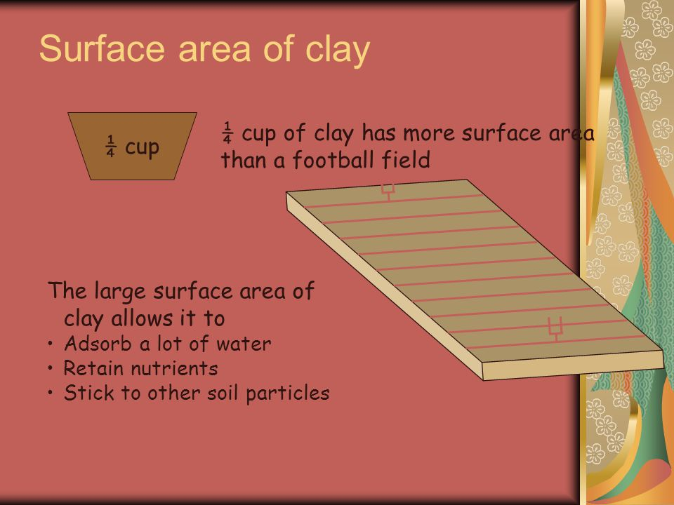 Surface area of clay ¼ cup ¼ cup of clay has more surface area than a football field The large surface area of clay allows it to Adsorb a lot of water Retain nutrients Stick to other soil particles