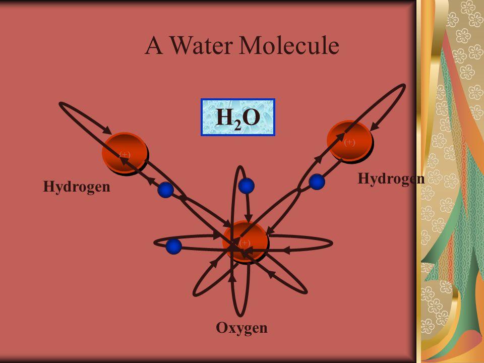 A Water Molecule H2OH2O (+) Hydrogen Oxygen