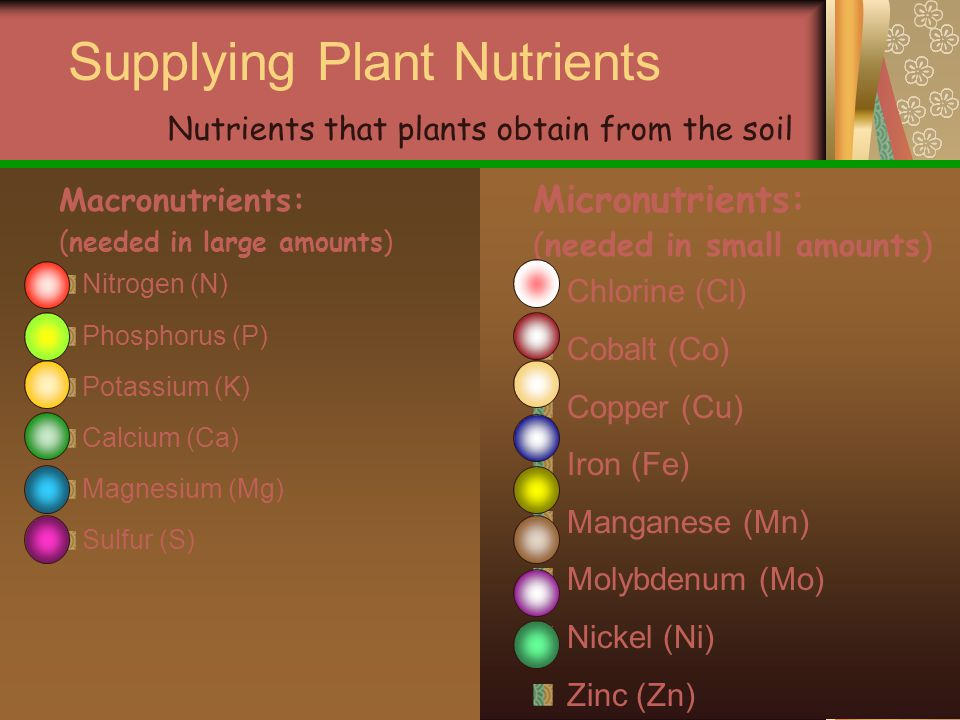 Supplying Plant Nutrients Macronutrients: (needed in large amounts) Nitrogen (N) Phosphorus (P) Potassium (K) Calcium (Ca) Magnesium (Mg) Sulfur (S) Micronutrients: (needed in small amounts) Chlorine (Cl) Cobalt (Co) Copper (Cu) Iron (Fe) Manganese (Mn) Molybdenum (Mo) Nickel (Ni) Zinc (Zn) Nutrients that plants obtain from the soil