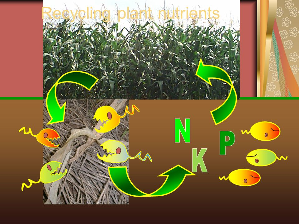 Breakdown of soil minerals Acid Ca Mg K Cu Ni Zn Water
