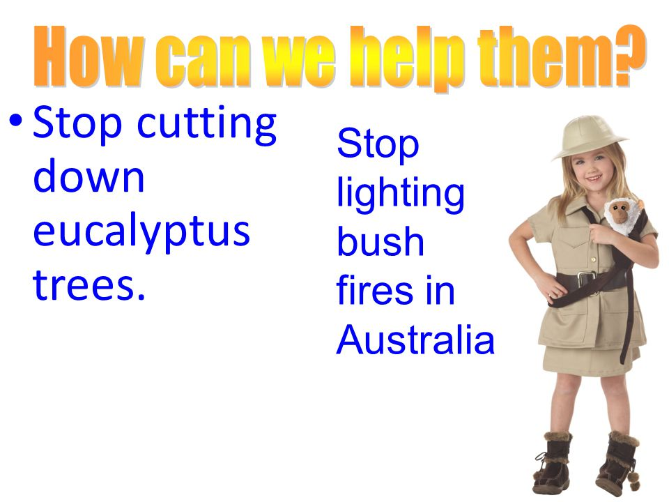 Stop cutting down eucalyptus trees. Stop lighting bush fires in Australia