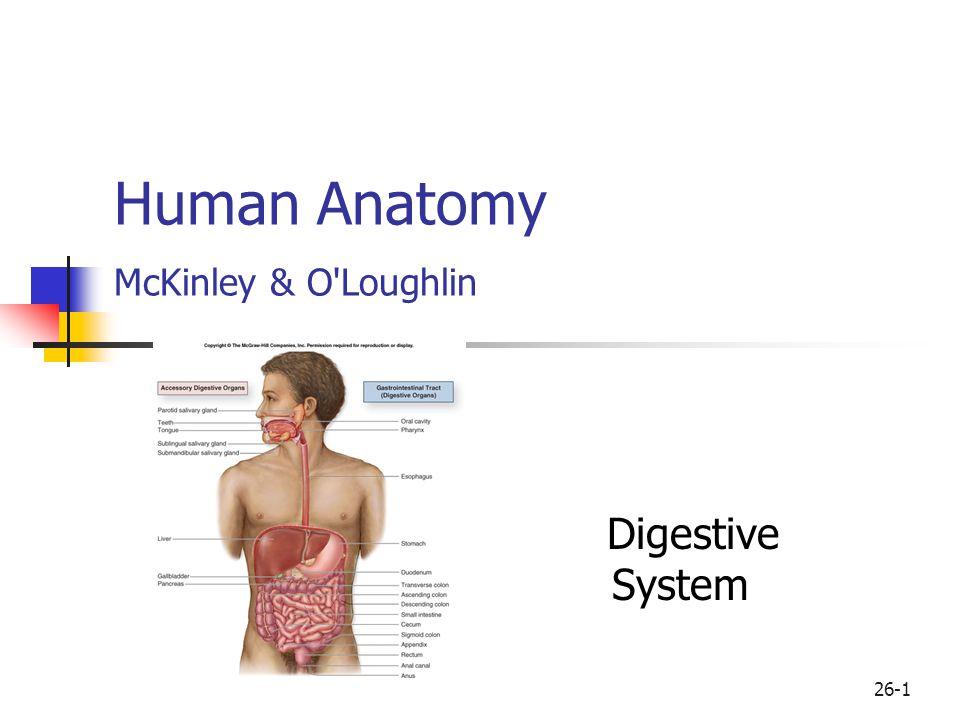 26-1 Human Anatomy McKinley & O Loughlin Digestive System