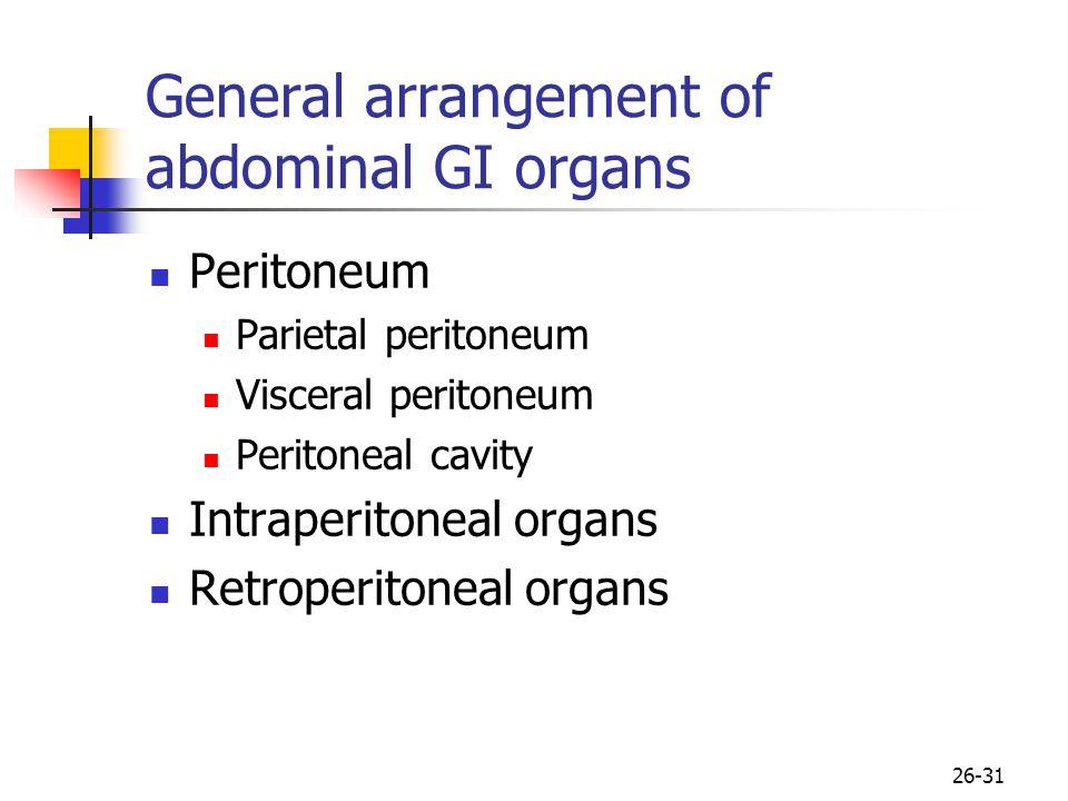 26-31 General arrangement of abdominal GI organs Peritoneum Parietal peritoneum Visceral peritoneum Peritoneal cavity Intraperitoneal organs Retroperitoneal organs
