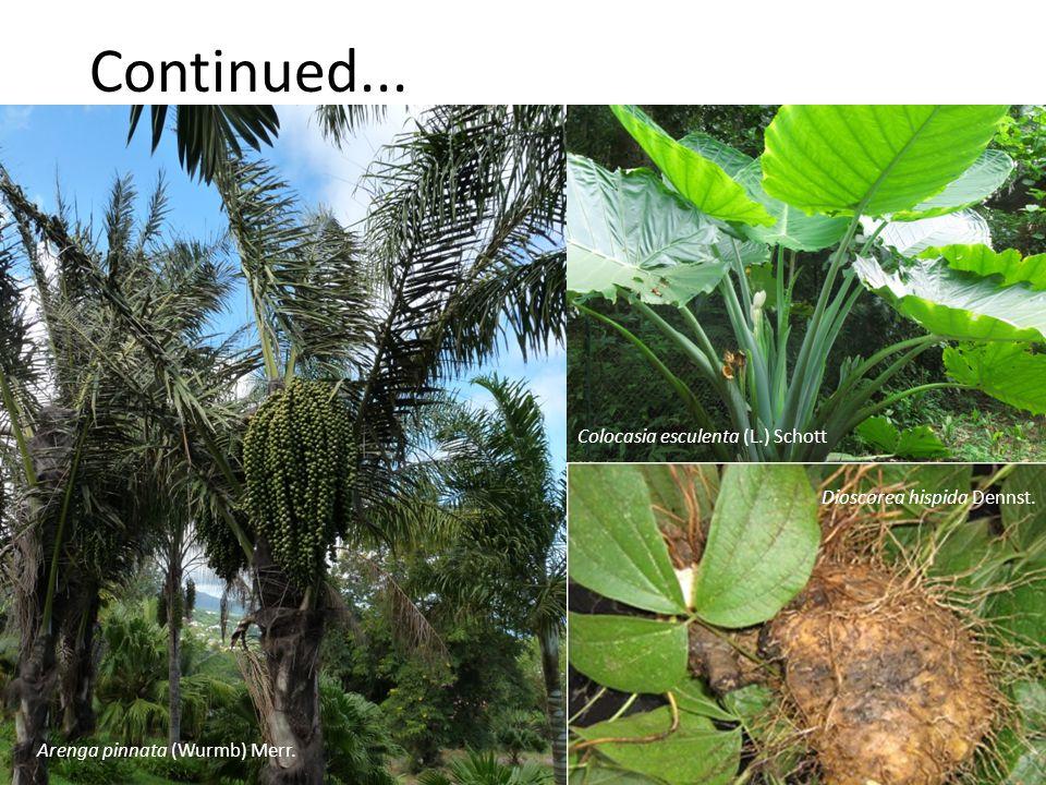 Continued... Colocasia esculenta (L.) Schott Arenga pinnata (Wurmb) Merr. Dioscorea hispida Dennst.