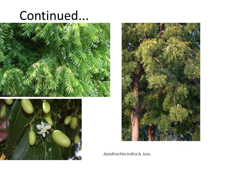 Continued... Azadirachta indica A. Juss.