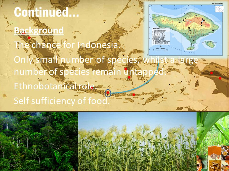 Continued… Problem Underutilized food plants in Indonesia, meanwhile imports millions of dollars' worth of food.