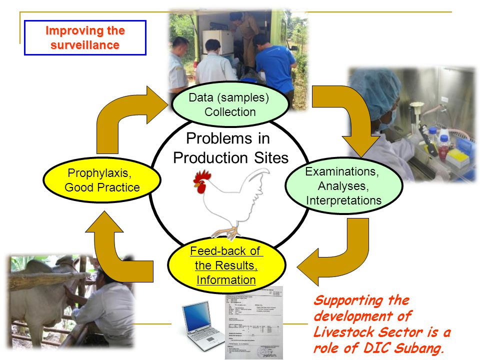 Problems in Production Sites Data (samples) Collection Feed-back of the Results, Information Examinations, Analyses, Interpretations Prophylaxis, Good Practice Supporting the development of Livestock Sector is a role of DIC Subang.