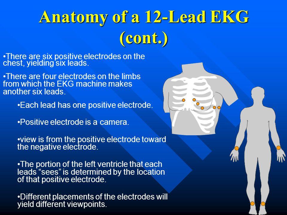 Each lead has one positive electrode. Positive electrode is a camera. view is from the positive electrode toward the negative electrode. The portion o