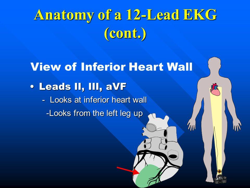 Leads II, III, aVFLeads II, III, aVF -Looks at inferior heart wall Anatomy of a 12-Lead EKG (cont.) View of Inferior Heart Wall -Looks from the left l