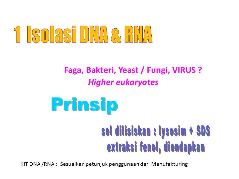 Faga, Bakteri, Yeast / Fungi, VIRUS .