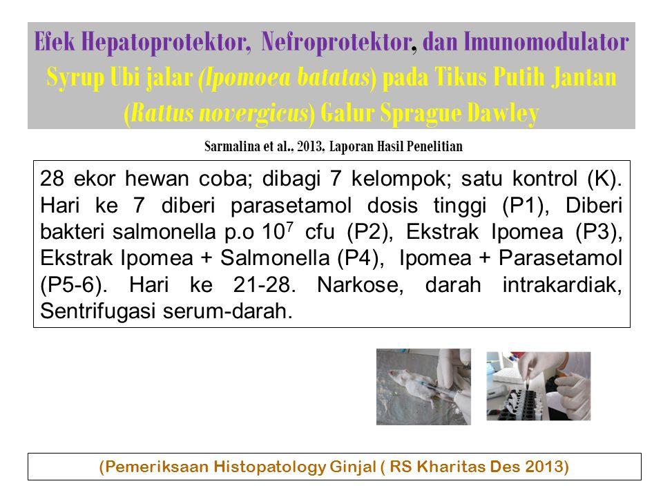 Efek Hepatoprotektor, Nefroprotektor, dan Imunomodulator Syrup Ubi jalar (Ipomoea batatas) pada Tikus Putih Jantan (Rattus novergicus) Galur Sprague Dawley Sarmalina et al., 2013, Laporan Hasil Penelitian 28 ekor hewan coba; dibagi 7 kelompok; satu kontrol (K).