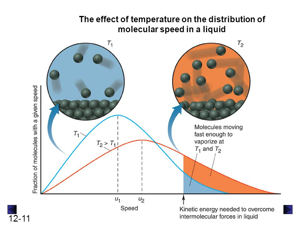 12-11 The effect of temperature on the distribution of molecular speed in a liquid
