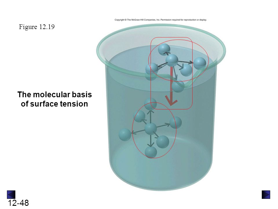 12-48 Figure 12.19 The molecular basis of surface tension