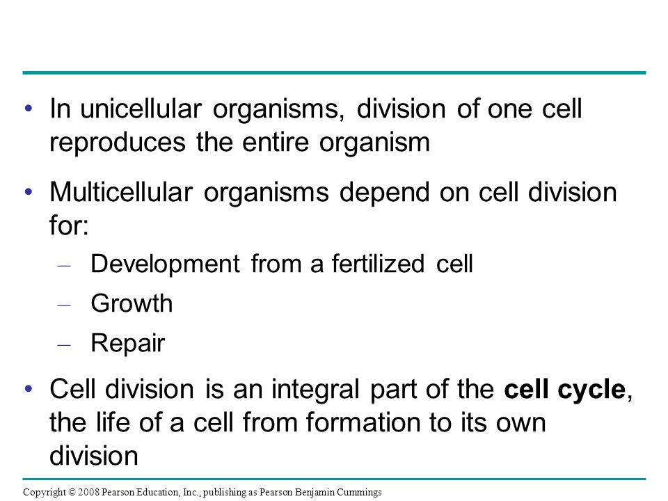 Cytokinesis: A Closer Look In animal cells, cytokinesis occurs by a process known as cleavage, forming a cleavage furrow In plant cells, a cell plate forms during cytokinesis Animation: Cytokinesis Animation: Cytokinesis Copyright © 2008 Pearson Education, Inc., publishing as Pearson Benjamin Cummings