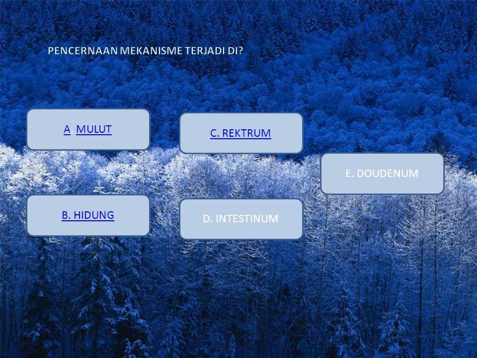 AA. MULUTMULUT E. DOUDENUM D. INTESTINUM B. HIDUNG C. REKTRUM