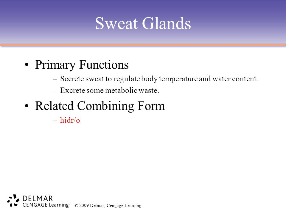 © 2009 Delmar, Cengage Learning Sweat Glands Primary Functions –Secrete sweat to regulate body temperature and water content. –Excrete some metabolic