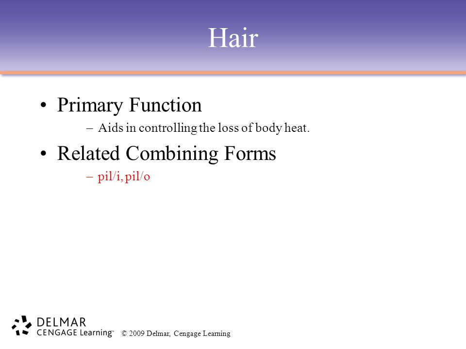 © 2009 Delmar, Cengage Learning Hair Primary Function –Aids in controlling the loss of body heat. Related Combining Forms –pil/i, pil/o