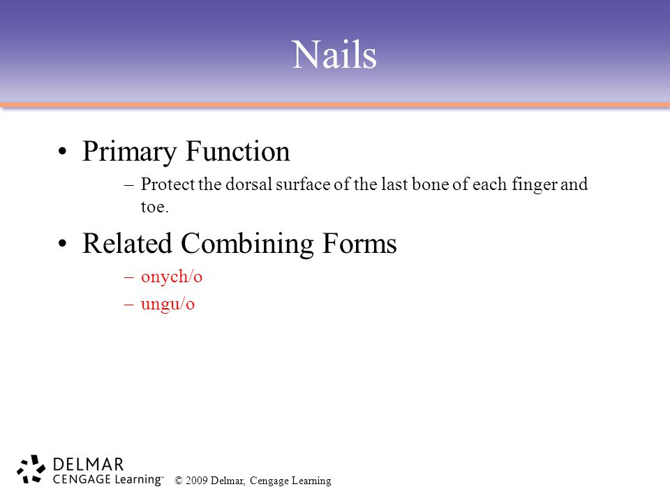 © 2009 Delmar, Cengage Learning Nails Primary Function –Protect the dorsal surface of the last bone of each finger and toe. Related Combining Forms –o