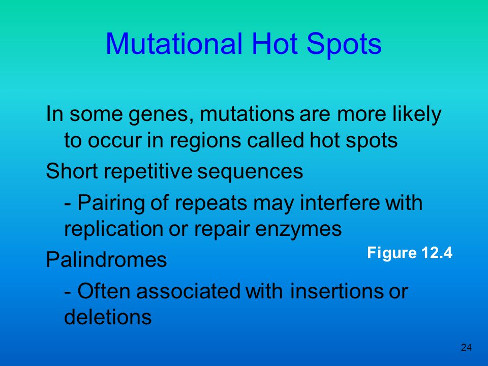24 Figure 12.4 Mutational Hot Spots In some genes, mutations are more likely to occur in regions called hot spots Short repetitive sequences - Pairing
