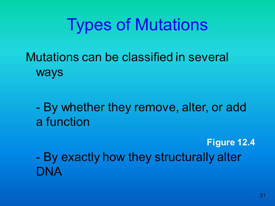 31 Figure 12.4 Types of Mutations Mutations can be classified in several ways - By whether they remove, alter, or add a function - By exactly how they