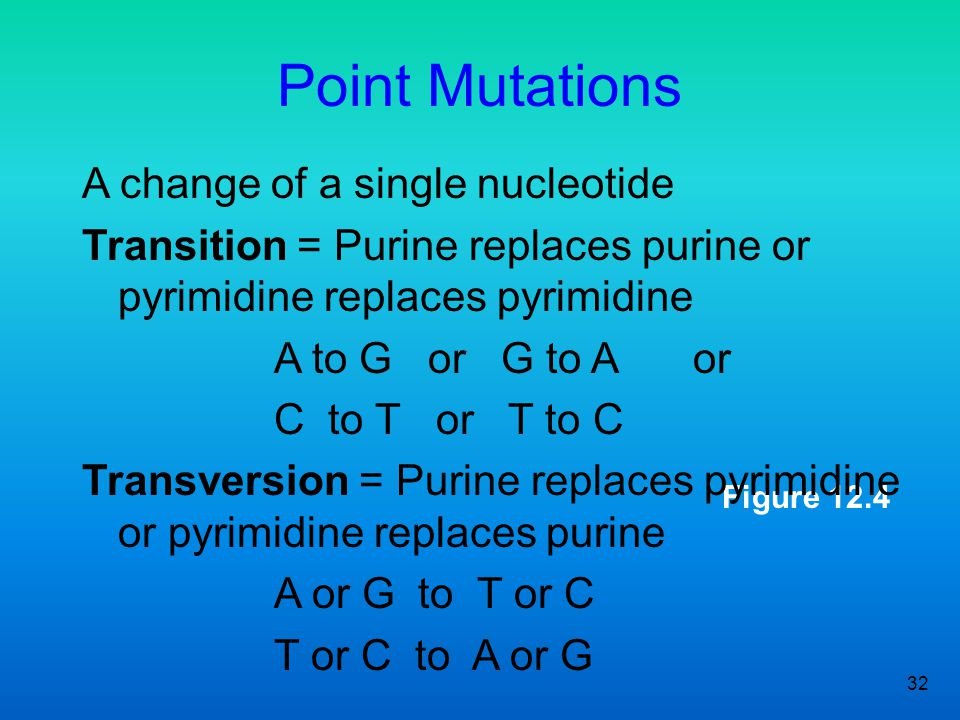 32 Figure 12.4 Point Mutations A change of a single nucleotide Transition = Purine replaces purine or pyrimidine replaces pyrimidine A to G or G to A