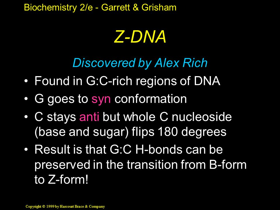 Biochemistry 2/e - Garrett & Grisham Copyright © 1999 by Harcourt Brace & Company Z-DNA Discovered by Alex Rich Found in G:C-rich regions of DNA G goes to syn conformation C stays anti but whole C nucleoside (base and sugar) flips 180 degrees Result is that G:C H-bonds can be preserved in the transition from B-form to Z-form!