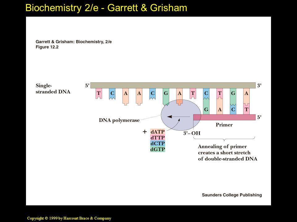 Biochemistry 2/e - Garrett & Grisham Copyright © 1999 by Harcourt Brace & Company 12.7 Sec/Tert Structure of RNA Transfer RNA Extensive H-bonding creates four double helical domains, three capped by loops, one by a stem Only one tRNA structure (alone) is known Phenylalanine tRNA is L-shaped Many non-canonical base pairs found in tRNA
