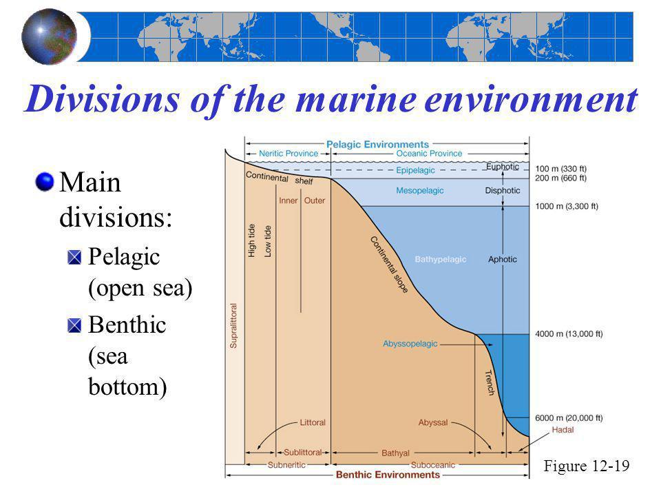 Divisions of the marine environment Main divisions: Pelagic (open sea) Benthic (sea bottom) Figure 12-19