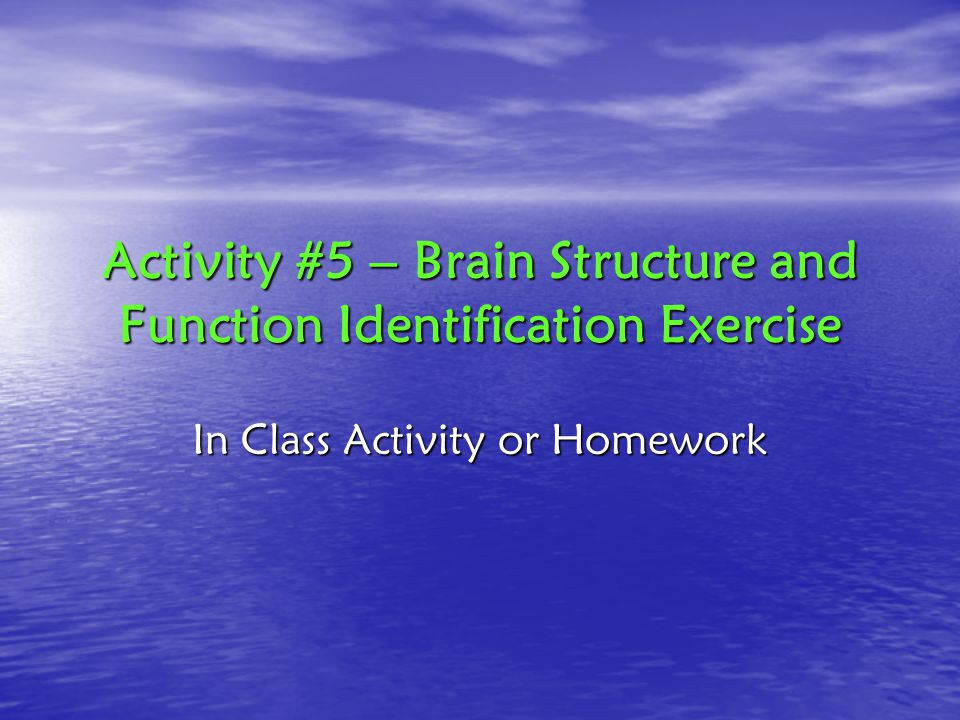 Activity #5 – Brain Structure and Function Identification Exercise In Class Activity or Homework