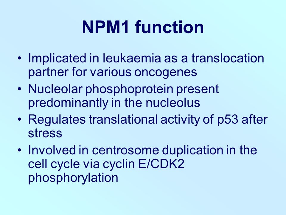 NPM1 function Implicated in leukaemia as a translocation partner for various oncogenes Nucleolar phosphoprotein present predominantly in the nucleolus Regulates translational activity of p53 after stress Involved in centrosome duplication in the cell cycle via cyclin E/CDK2 phosphorylation