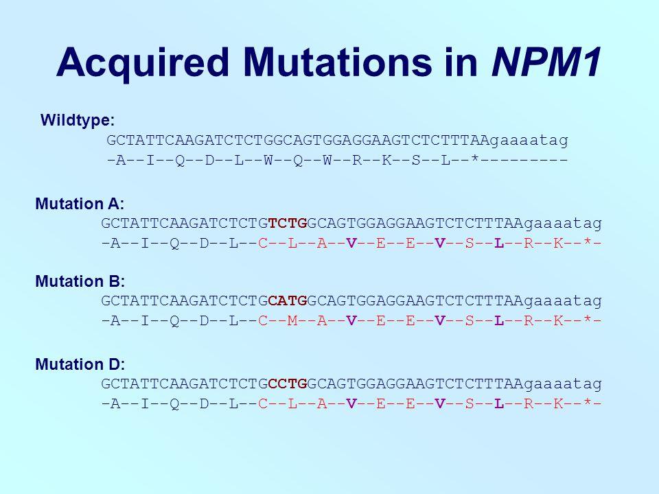Acquired Mutations in NPM1 Wildtype: GCTATTCAAGATCTCTGGCAGTGGAGGAAGTCTCTTTAAgaaaatag -A--I--Q--D--L--W--Q--W--R--K--S--L--*--------- Mutation A: GCTATTCAAGATCTCTGTCTGGCAGTGGAGGAAGTCTCTTTAAgaaaatag -A--I--Q--D--L--C--L--A--V--E--E--V--S--L--R--K--*- Mutation B: GCTATTCAAGATCTCTGCATGGCAGTGGAGGAAGTCTCTTTAAgaaaatag -A--I--Q--D--L--C--M--A--V--E--E--V--S--L--R--K--*- Mutation D: GCTATTCAAGATCTCTGCCTGGCAGTGGAGGAAGTCTCTTTAAgaaaatag -A--I--Q--D--L--C--L--A--V--E--E--V--S--L--R--K--*-