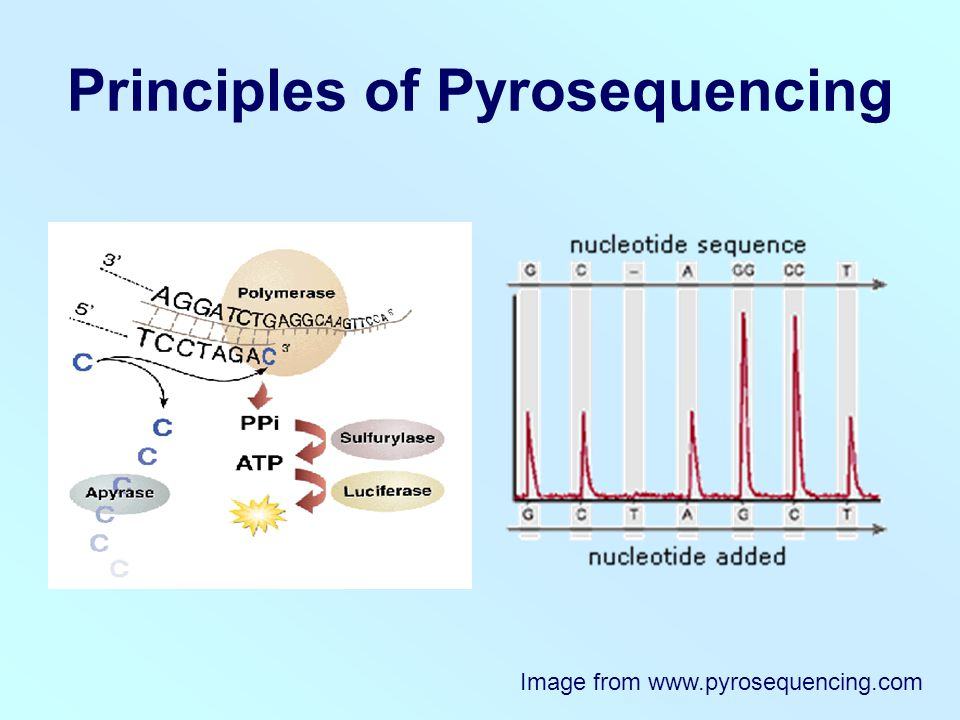Principles of Pyrosequencing Image from www.pyrosequencing.com