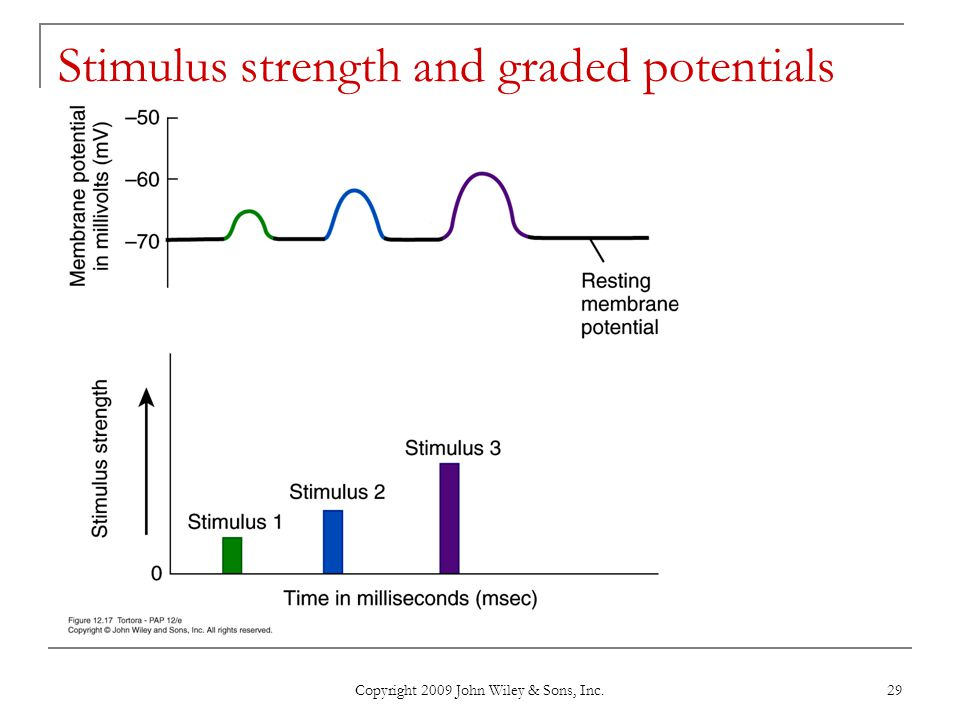Copyright 2009 John Wiley & Sons, Inc. 29 Stimulus strength and graded potentials