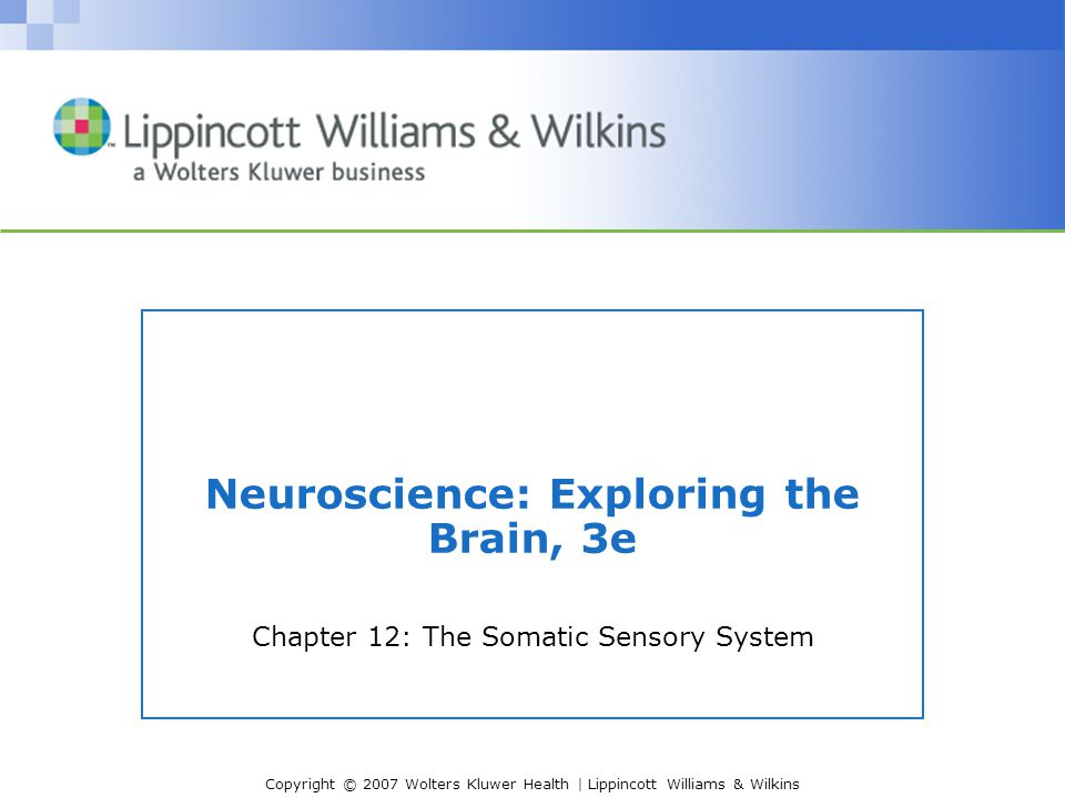 Copyright © 2007 Wolters Kluwer Health | Lippincott Williams & Wilkins Neuroscience: Exploring the Brain, 3e Chapter 12: The Somatic Sensory System
