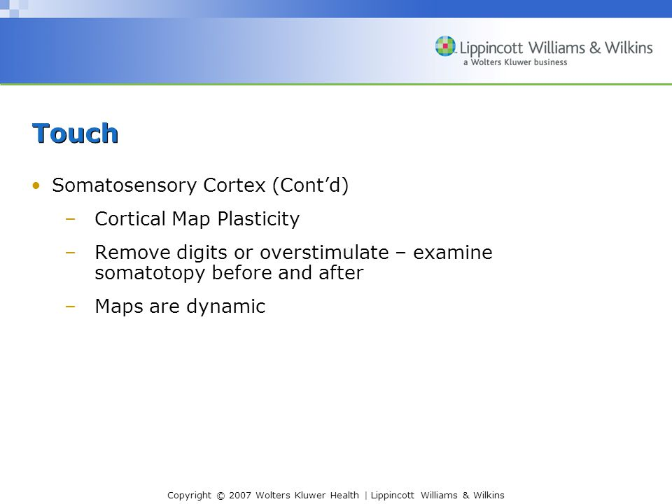 Copyright © 2007 Wolters Kluwer Health | Lippincott Williams & Wilkins Touch Somatosensory Cortex (Cont'd) –Cortical Map Plasticity –Remove digits or overstimulate – examine somatotopy before and after –Maps are dynamic