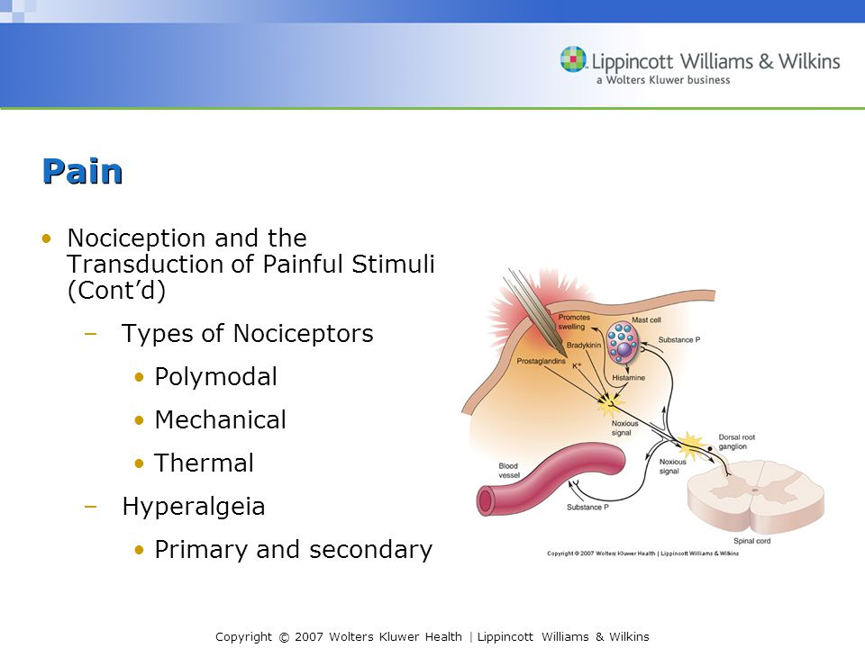 Copyright © 2007 Wolters Kluwer Health | Lippincott Williams & Wilkins Pain Nociception and the Transduction of Painful Stimuli (Cont'd) –Types of Nociceptors Polymodal Mechanical Thermal –Hyperalgeia Primary and secondary