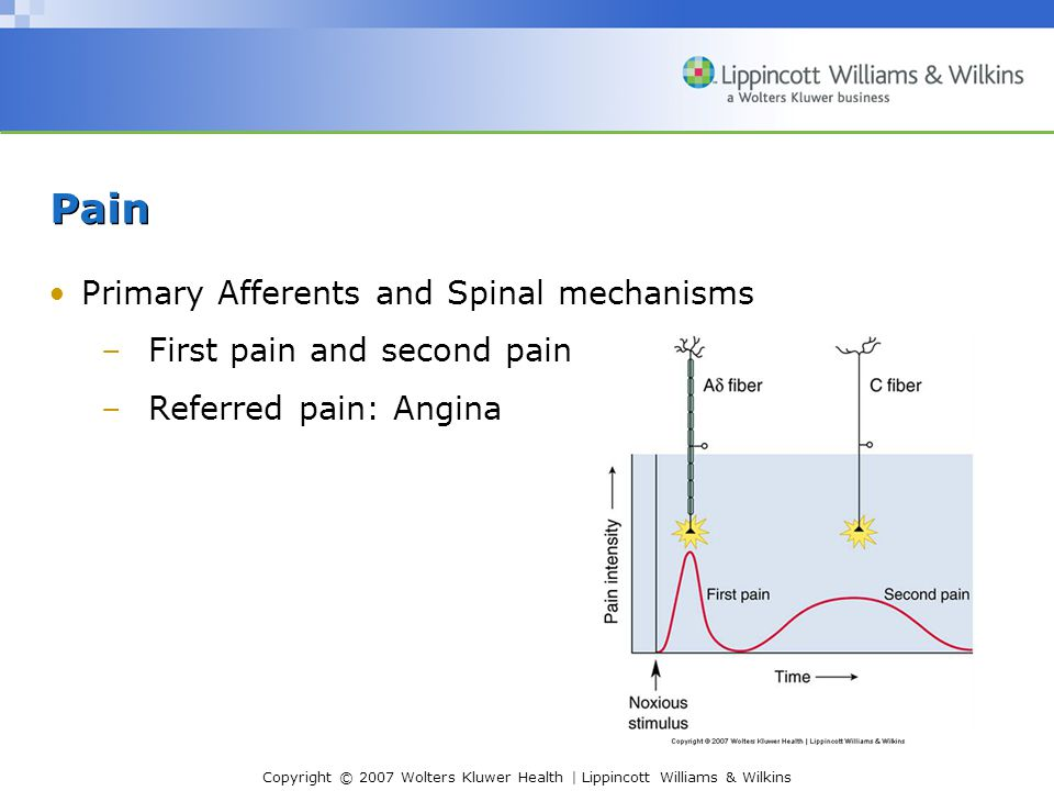Copyright © 2007 Wolters Kluwer Health | Lippincott Williams & Wilkins Pain Primary Afferents and Spinal mechanisms –First pain and second pain –Referred pain: Angina