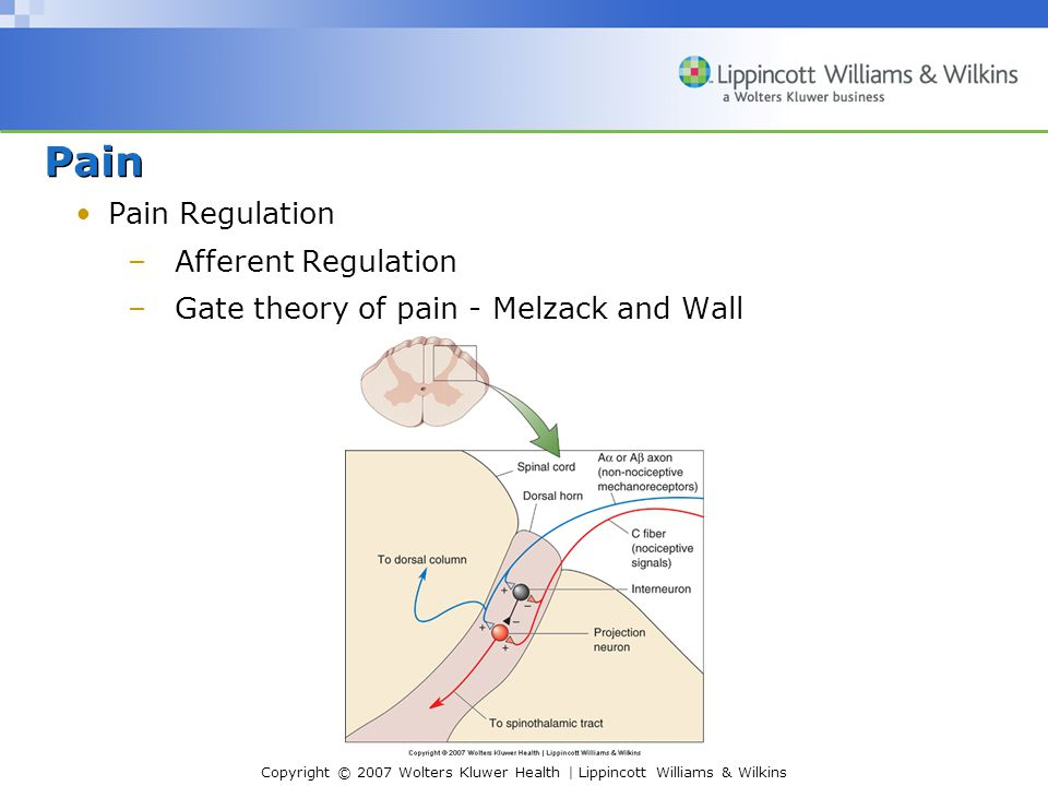 Copyright © 2007 Wolters Kluwer Health | Lippincott Williams & Wilkins Pain Pain Regulation –Afferent Regulation –Gate theory of pain - Melzack and Wall