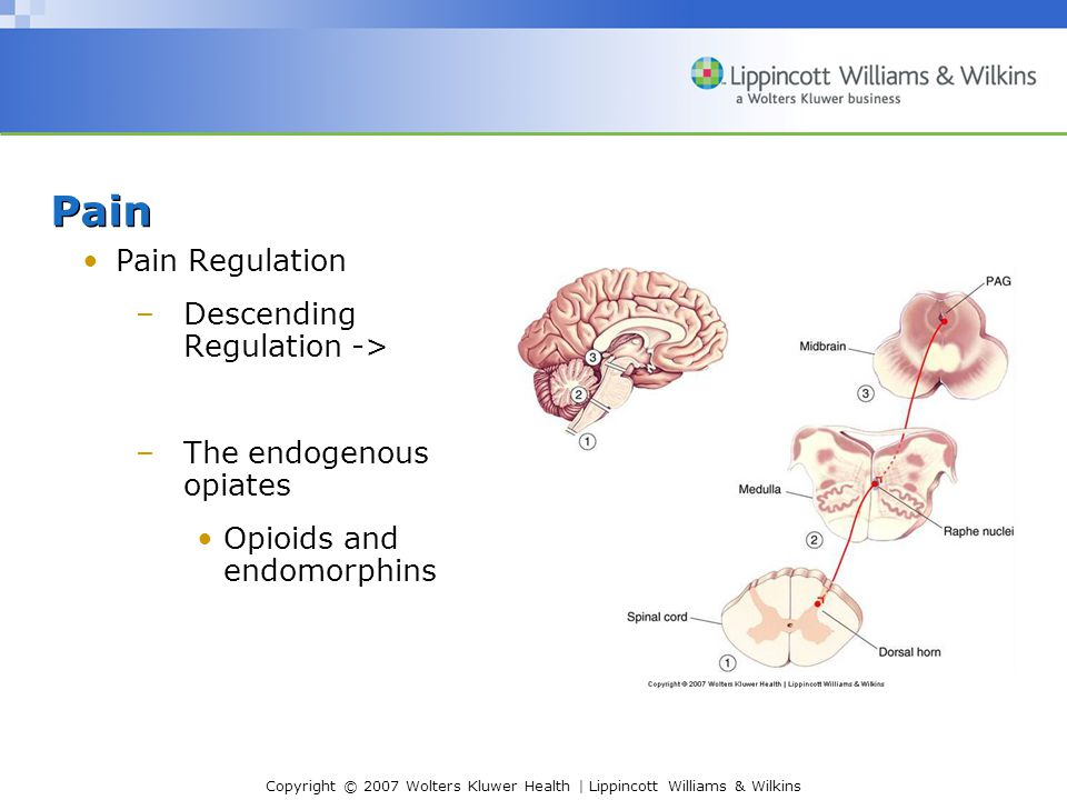 Copyright © 2007 Wolters Kluwer Health | Lippincott Williams & Wilkins Pain Pain Regulation –Descending Regulation -> –The endogenous opiates Opioids and endomorphins