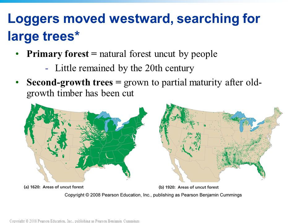 Copyright © 2008 Pearson Education, Inc., publishing as Pearson Benjamin Cummings Loggers moved westward, searching for large trees* Primary forest = natural forest uncut by people - Little remained by the 20th century Second-growth trees = grown to partial maturity after old- growth timber has been cut