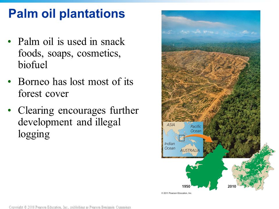 Copyright © 2008 Pearson Education, Inc., publishing as Pearson Benjamin Cummings Palm oil plantations Palm oil is used in snack foods, soaps, cosmetics, biofuel Borneo has lost most of its forest cover Clearing encourages further development and illegal logging