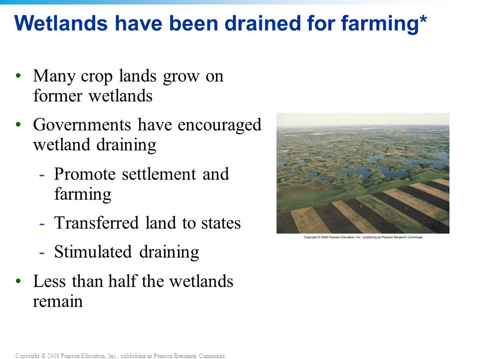 Copyright © 2008 Pearson Education, Inc., publishing as Pearson Benjamin Cummings Wetlands have been drained for farming* Many crop lands grow on former wetlands Governments have encouraged wetland draining -Promote settlement and farming -Transferred land to states -Stimulated draining Less than half the wetlands remain