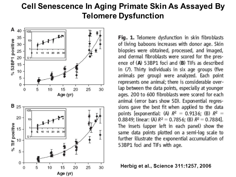 Cell Senescence In Aging Primate Skin As Assayed By Telomere Dysfunction Herbig et al., Science 311:1257, 2006