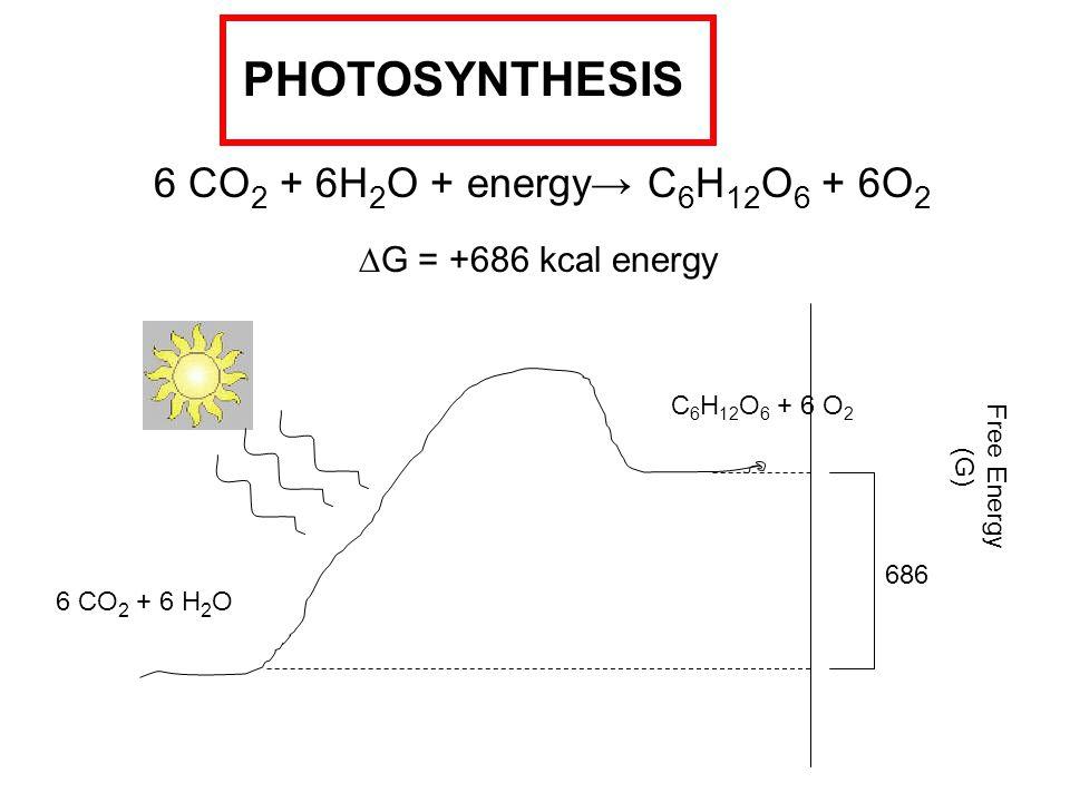6 CO 2 + 6H 2 O + energy→ C 6 H 12 O 6 + 6O 2 PHOTOSYNTHESIS  G = +686 kcal energy Free Energy (G) 6 CO 2 + 6 H 2 O C 6 H 12 O 6 + 6 O 2 686
