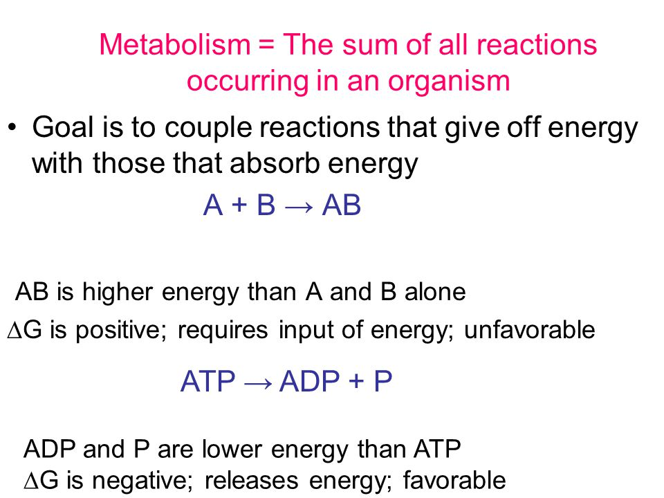 Metabolism = The sum of all reactions occurring in an organism Goal is to couple reactions that give off energy with those that absorb energy A + B → AB AB is higher energy than A and B alone  G is positive; requires input of energy; unfavorable ADP and P are lower energy than ATP  G is negative; releases energy; favorable ATP → ADP + P